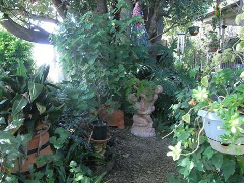 Grafton Rose Garden 1